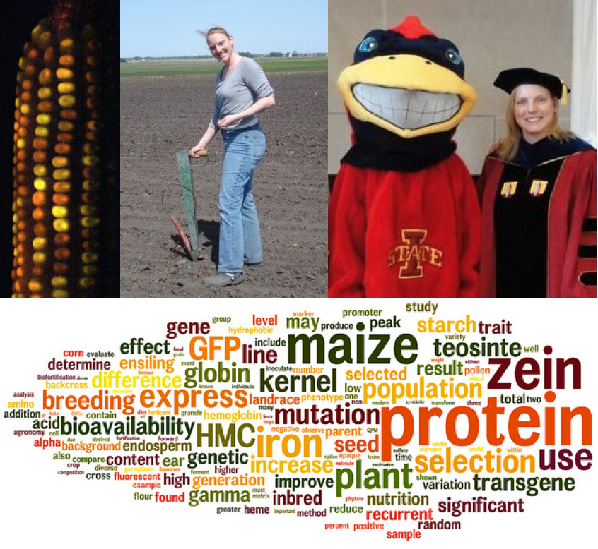 Anastasia's doctorate in images: corn expressing green fluorescent protein; planting corn by hand; a graduation photo with Cy, the mascot of Iowa State; and a corn-shaped word cloud of Anastasia's thesis.